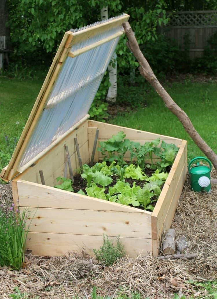 Gardening in a cold frame -Why every gardener should own one