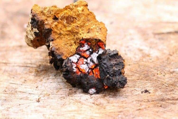 a close up shot of a piece of chaga smoldering for use as a fire starter