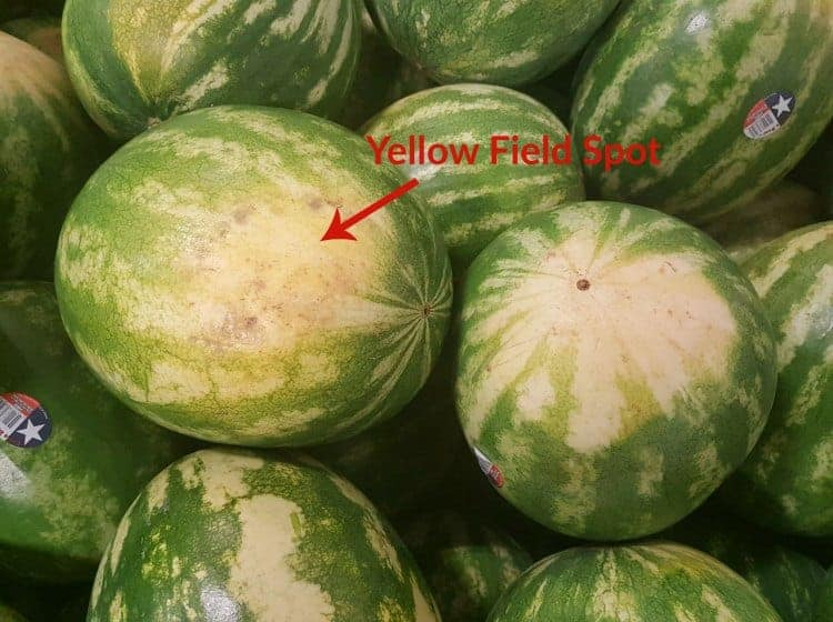 a bunch of watermelons with a red arrow showing where the field spot is