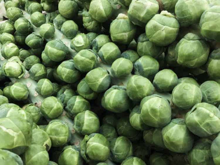 harvested brussels sprout stalks