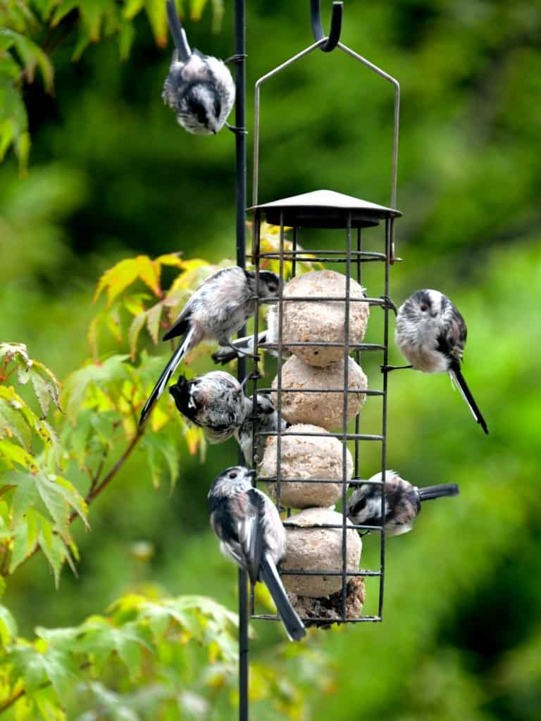 a suet ball feeder